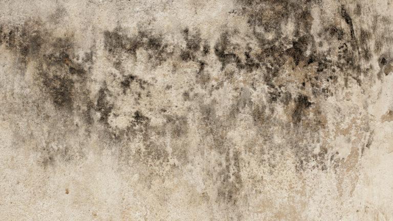 paint resistant mold