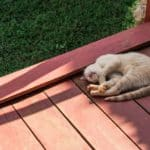 Cat on stain deck